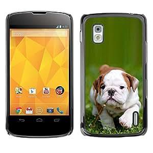 PC/Aluminum Funda Carcasa protectora para LG Google Nexus 4 E960 Boston Bulldog Terrier Puppy Green Summer / JUSTGO PHONE PROTECTOR