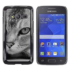 TopCaseStore / la caja del caucho duro de la cubierta de protección de la piel - Cat Black White Hear Shorthair American - Samsung Galaxy Ace 4 G313 SM-G313F
