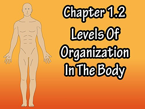 Chapter 1.2 Levels Of Organization In The Body
