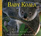 Baby Koala, Aubrey Lang, 1550418769