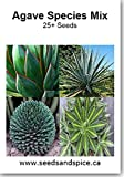 Agave Species Mix 25+ Seeds