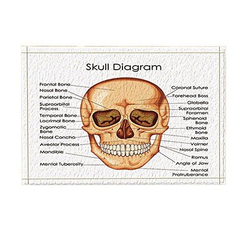 KOTOM Skull Diagram Decor, Medical Education Chart of Biology for Human Bath Rugs, Non-Slip Doormat Floor Entryways Indoor Front Door Mat, Kids Bath Mat, 15.7x23.6in, Bathroom Accessories -