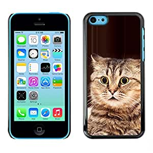 Playing Cat American Bobtail Manx Brown - Metal de aluminio y de plástico duro Caja del teléfono - Negro - Apple iPhone 5C