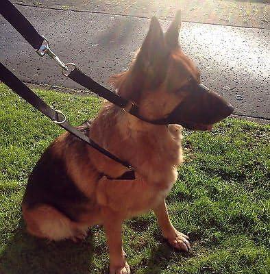 Arnés con correa para entrenamiento policial de perros, sin ...