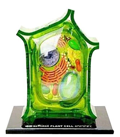 Beautifully detailed Plant Cell Anatomy Model - 24 detachable parts! (Age 8+) (Animal Cell Model compare prices)