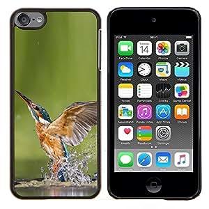 EJOOY---Cubierta de la caja de protección para la piel dura ** Apple iPod Touch 6 6th Touch6 ** --Enfriar Kingfisher En Agua