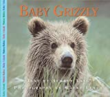 Baby Grizzly, Aubrey Lang, 1550415778