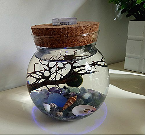 NewDreamWorld's Marimo Terrarium Kit-Large Opening Orb Terrarium with LED Light Cork, Marimo Ball, Fluorite Aquarium Gravel, Seashells and Sea Fan-Home Decor