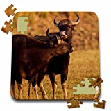 Danita Delimont - Cattle - Pair of Indian Gaur, Tadoba Andheri Tiger Reserve - 10x10 Inch Puzzle (pzl_225609_2)