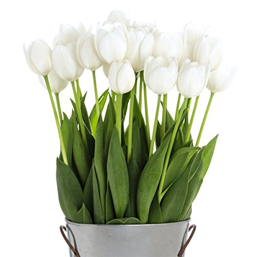 Stargazer Barn - 24 Stems Elegant White Silentia Tulips with Rustic Décor Style Galvanized Vase - Direct From Farm - 2 Dozen White Tulips - Sustainably Grown in California - White Flowers by Stargazer Barn