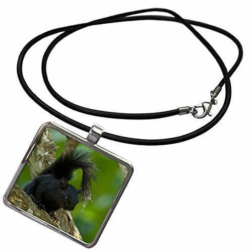 3dRose Danita Delimont - Squirrels - Mexico, Tamaulipas State, red-bellied squirrel - SA13 BJA0117 - Jaynes Gallery - Necklace With Rectangle Pendant (Bellied Squirrel)