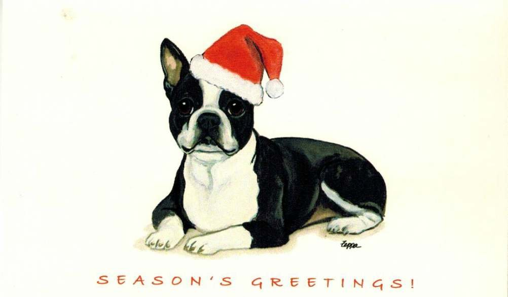 Amazon.com : Boston Terrier Christmas Cards Box of 8 Cards : Office ...