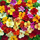 Mimulus Twinkle Mix 1,000 seeds