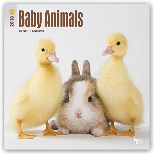 Baby Animal Squares - 5