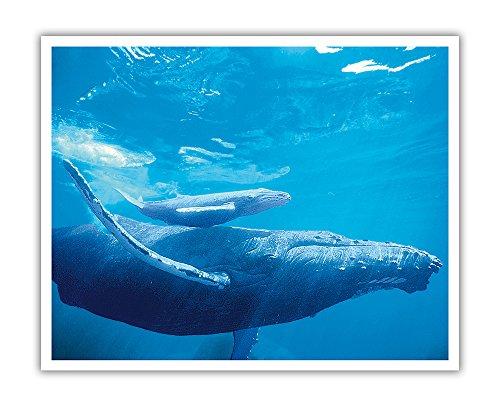 Pacifica Island Art Mother and Calf - Hawaiian Humpback Whales (Kohol_) - Original Color Photograph by Michael S. Nolan - Hawaiian Fine Art Print - 16in x 20in
