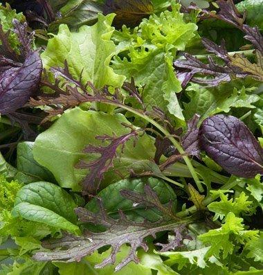 David's Garden Seeds Greens Mix Premium D650A (Green) 500 Open Pollinated Seeds