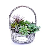 WMAOT Artificial Succulent Plants in Oval Basket Faux Potted Floral Decorative for Garden Office Living Room and Home Decor (Green 1)