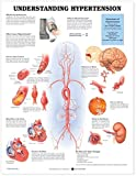Bovine anatomy chart
