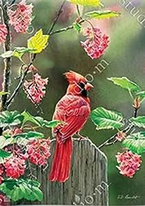 Cardinal belleza jardín bandera 33402