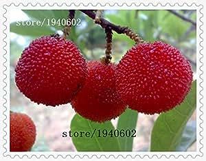 semillas calientes de la venta madroño semillas de fresa de jardín en maceta de la familia arrayán plantaron árboles frutales 10 / paquete