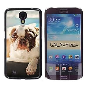 A-type Arte & diseño plástico duro Fundas Cover Cubre Hard Case Cover para Samsung Galaxy Mega 6.3 (Lindo Perro - Boston Terrier)