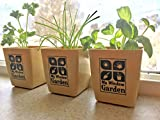 My Window Garden Mini Herb Garden Kit Includes Basil Chives and Parsley