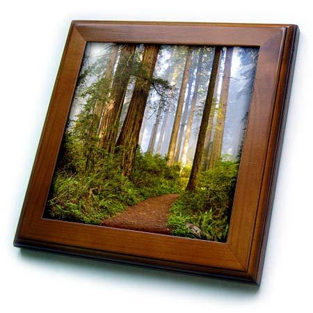 3dRose Danita Delimont - Trees - USA, California. Del Norte SP, Trail Leading into The Redwoods - 8x8 Framed Tile (ft_314675_1) ()