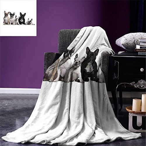 smallbeefly Bulldog Lightweight Blanket Group of Young French Bulldogs with Adorable Expressions Animal Lover Photo Digital Printing Blanket Black White Beige by smallbeefly