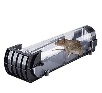 Maus Lebendfallen Dieser Mausefalle Lebend Und Spielend