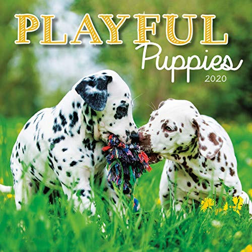 Turner Licensing Turner Photo Playful Puppies 2020 12X12 Photo Wall Calendar (20998940045)