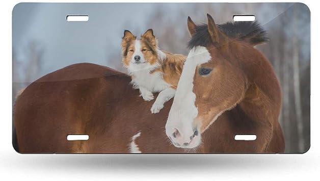 AUSTRALIAN SHEPHERD DOGS Metal License Plate Frame Tag Border Four Holes