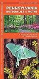 Pennsylvania Butterflies & Moths: A Folding Pocket Guide to Familiar Species (A Pocket Naturalist Guide)