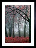 fall pictures - PHOTO NATURE FOREST TREE AUTUMN FALL BEAUTIFUL RED FRAMED PRINT F12X4210