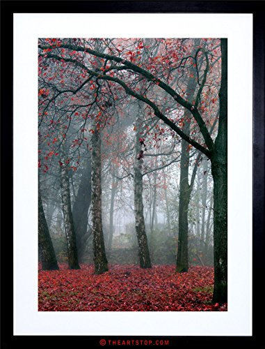 PHOTO NATURE FOREST TREE AUTUMN FALL BEAUTIFUL RED FRAMED PRINT F12X4210