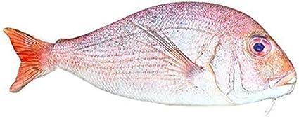 Estuche para lápices con forma de pez (rojo): Amazon.es: Oficina y papelería