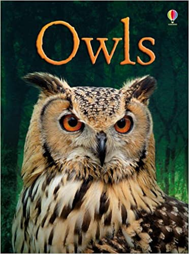 Image result for owls clare lywellen