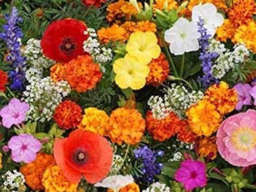 (Zellajake Farm and Garden Deer Resistant Wildflower Mix Seeds Easy Grow Cut Flower ST18 (15600+ Seeds, or 1 oz))