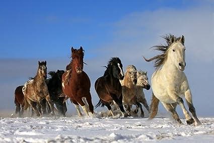 amazon com snow running horses art print on canvas wall decor