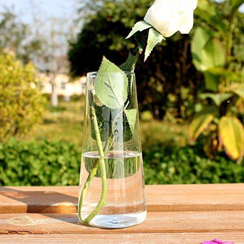 Cilindro Forma Plantas hidropónico Jarrón botella de cristal casa ...