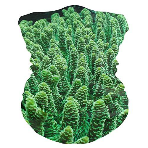 Green Coral Reefs Balaclava Womens Headband Scarf Mens Versatile Bandana, Muffler, Neck Gaiter, Magic, Headwrap Sweatband