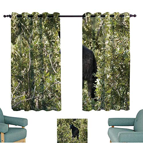 WinfreyDecor Printed Curtain Black Bear cub on Tree top Eating Acorns Littleton Colorado Privacy Protection 55