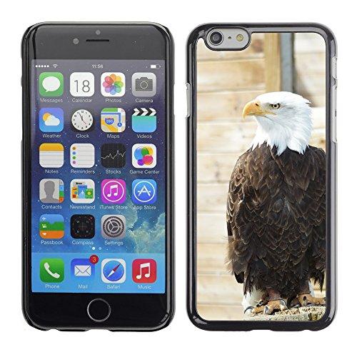 """Bild Hart Handy Schwarz Schutz Case Cover Schale Etui // M00133384 Weißkopfseeadler Adler Vogel Gefieder // Apple iPhone 6 PLUS 5.5"""""""