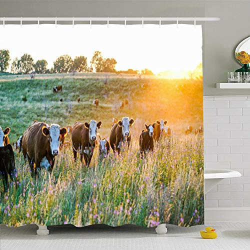 - Ahawoso Shower Curtain 60x72 Inches Livestock Cow Nebraska Hereford Cattle Sunset Nature Countryside Parks Farm Midwest Sunny Agriculture Waterproof Polyester Fabric Bathroom Curtains Set with Hooks