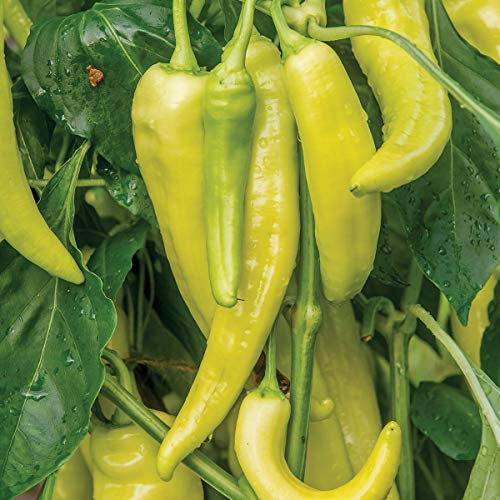 Burpee Blazing Banana Hot Pepper Seeds 25 seeds