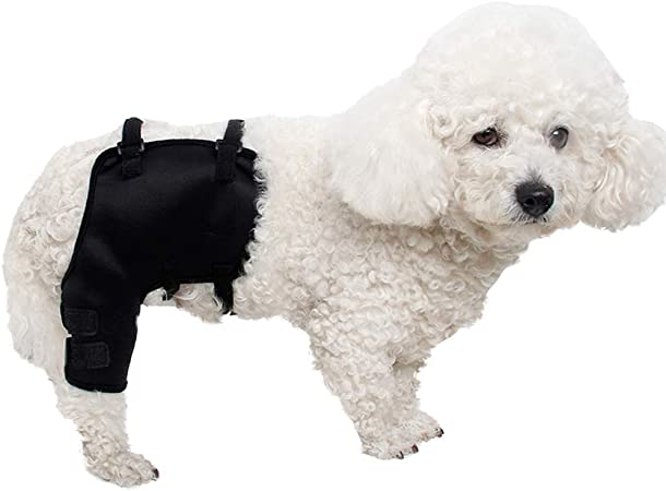 dog knee support brace