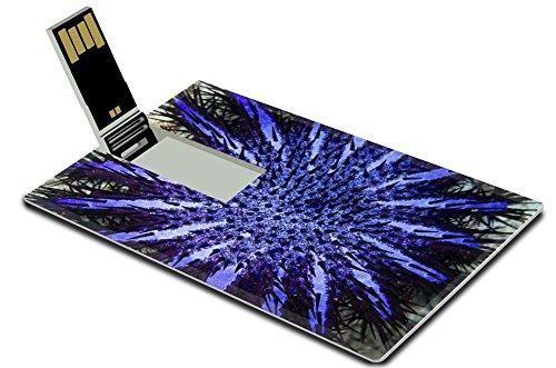 Luxlady 32GB USB Flash Drive 2.0 Memory Stick Credit Card Size crown of thorns starfish coral predator IMAGE 35122438