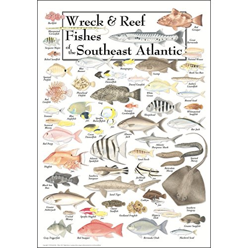 (Earth Sky & Water Poster - Wreck & Reef Fishes of the Southeast Atlantic Coast)