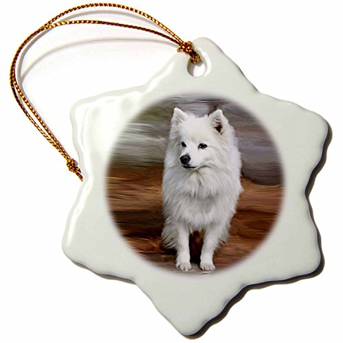 - 3dRose American Eskimo Toy Dog Snowflake Porcelain Ornament, 3-Inch