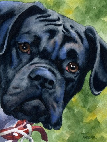 Black Boxer Art Print by Watercolor Artist DJ Rogers
