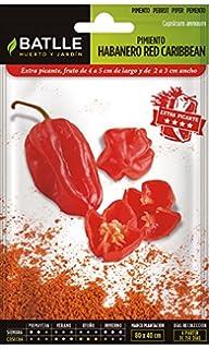 Gift Republic Ltd GR330017 - Kit de Cultivo en casa: Amazon.es: Jardín